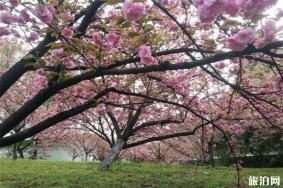 2020荆州文湖公园介绍 荆州文湖公园植物配备-游玩攻略