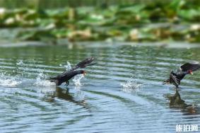 2020铜陵西湖湿地景区游玩攻略 西湖湿地景区具体地址天气景点介绍