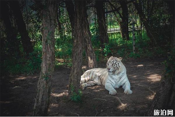 上海野生动物园全攻略 疫情开放预约停车指南