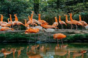 上海野生動物園全攻略 疫情開放預約停車指南