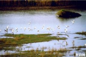 2020西洞庭湖国家城市湿地公园旅游攻略 西洞庭湖国家城市湿地公园门票交通天气景点介绍