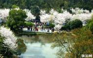 保山櫻花谷游玩攻略 櫻花谷櫻花開放時間