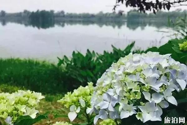 常熟繡球花觀賞地點推薦