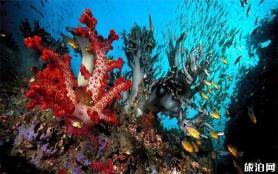 富國海底世界在哪 交通指南-年卡信息