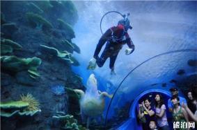 合肥漢海極地海洋世界怎么樣 漢海極地海洋世界介紹-游玩項目有哪些