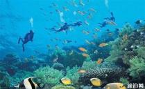2020亚龙湾海底世界游玩攻略 亚龙湾海底世界玩什么地址景点介绍