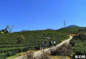 温州茶旅精品路线推荐