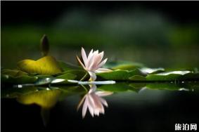 2020年上海植物園夏季花展什么時候開始 上海植物園夏季花展有哪些展覽