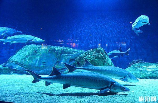 北京海洋館恢復營業時間是什么時候2020