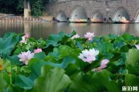 上海周邊賞荷花的地方推薦
