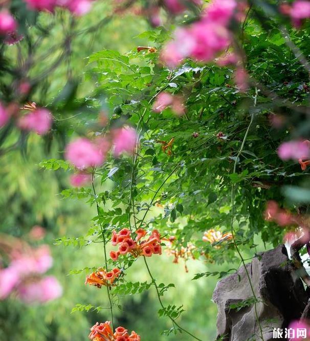 南京夫子庙瞻园美景图