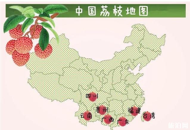 荔枝有哪些品种 各大品种荔枝上市时间