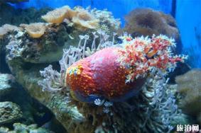 2020博螯海洋馆游玩攻略 博螯海洋馆在哪地址景点介绍