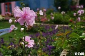 上海植物園花展2020美槿佳荷展攻略