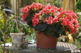 6月上海花展有哪些-時間地點