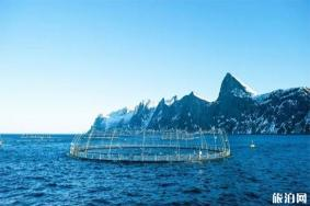 挪威哪里养殖三文鱼 虹鳟鱼和三文鱼的区别