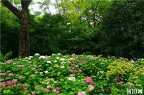 上海共青森林公園端午節芳香植物展 疫情后游玩指南