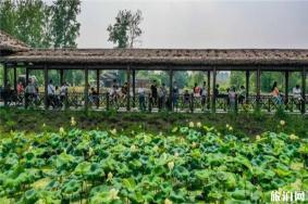 南京池杉湖湿地公园门票 荷花展信息2020