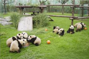2020上海野生动物园奇妙夜时间及游玩攻略