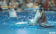南京海底世界表演时间 南京海底世界攻略
