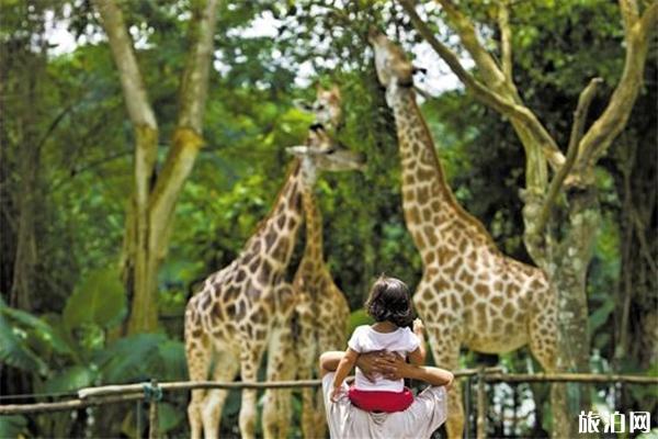 暑假有哪些熱門動物園 地址游玩指南