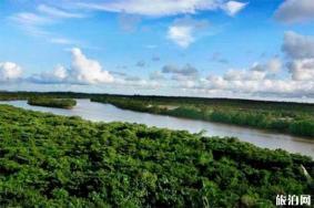 2020八门湾红树林游玩攻略 八门湾红树林地址天气景点介绍
