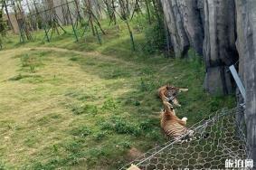 南通森林野生动物园有什么好玩的项目 分为几区