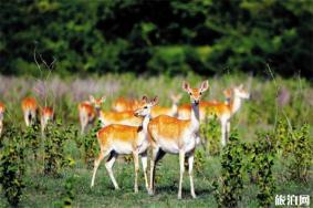 2020海南大田自然保护区游玩攻略 大田自然保护区地址天气景点介绍