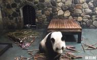 佛坪熊猫谷旅游区怎么样 佛坪熊猫谷一日游攻略