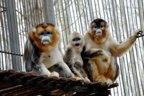 2020武威神州荒漠野生动物园门票开放时间 神州荒漠野生动物园旅游攻略