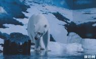 天津海昌極地海洋公園門票優惠政策 天津海昌極地海洋公園攻略