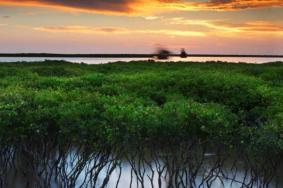 2020珠海紅樹林濕地保護區門票地址及游玩攻略
