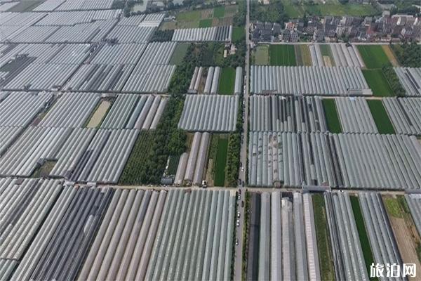 2020杭州富陽葡萄采摘攻略