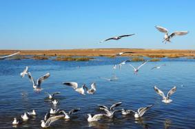 2020內蒙古居延海門票 居延海開放時間旅游攻略