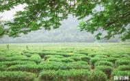 中國茶葉博物館龍井館區怎么樣 中國茶葉博物館參觀攻略