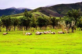 2020内蒙古扎鲁特旗山地草原门票 扎鲁特旗山地草原开放时间旅游攻略