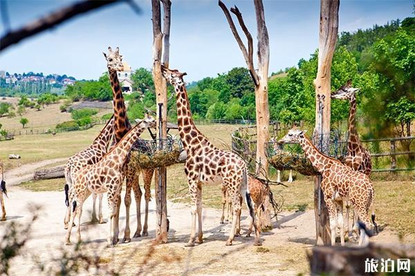2020秦皇岛野生动物园开园了吗 动物园简介