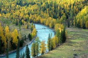 2020新疆白桦公园门票 白桦公园开放时间旅游攻略