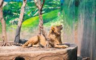 重庆动物园开放时间门票价格及游玩攻略