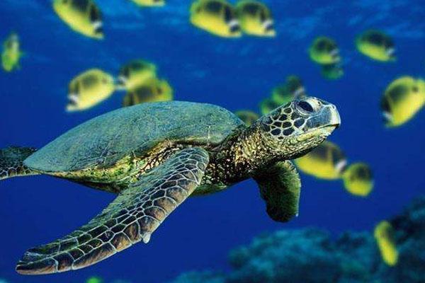 新澳海底世界门票多少钱 海豚表演时间