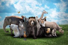 2020重庆野生动物世界门票地址及游玩攻略