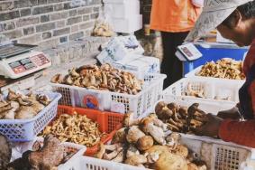 云南野生菌市场在哪 云南美食店推荐