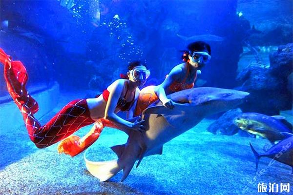 武汉东湖海洋世界好玩吗 武汉东湖海洋世界游玩攻略