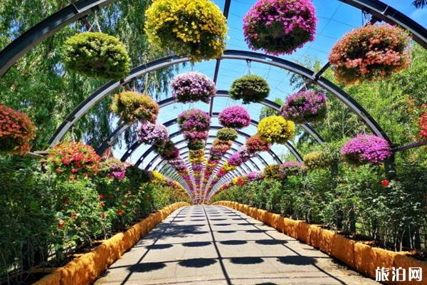 上海辰山植物园门票开放时间 辰山植物园游玩攻略