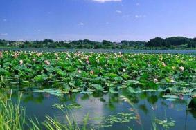 2020荆州洪湖蓝田生态旅游风景区门票交通 洪湖蓝田生态旅游风景区旅游攻略