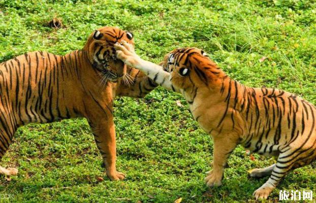 2020教师节深圳野生动物园门票优惠-表演时间表