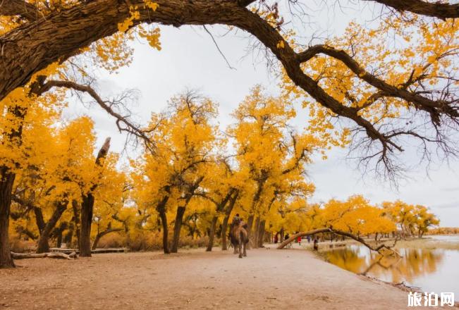 国内秋季旅游去哪里好玩 9月去哪里玩最合适