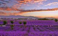 紫金花城景区几月份去最好