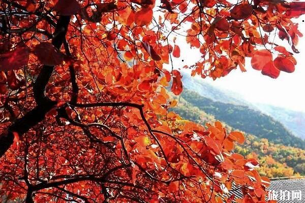 北京千灵山红叶的最佳观赏时间怎么走?