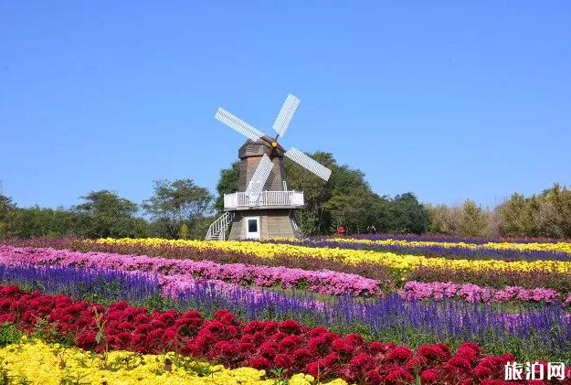 2020北京菊花文化节展区介绍及交通指南-菊花文化节活动时间